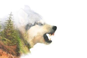 Angry Dog. Double Exposure by byrdyak