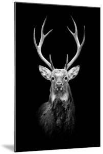 Deer on Dark Background by byrdyak