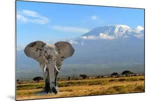 Elephant by byrdyak