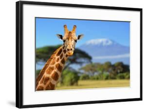 Giraffe in Front of Kilimanjaro Mountain by byrdyak