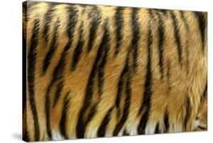 Texture of Real Tiger Skin by byrdyak