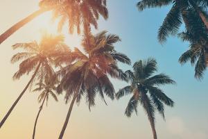 Tropical Sunset by byrdyak