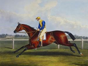 English Racehorses by C. Duncan