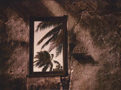 Palm View II