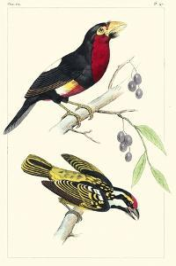 Lemaire Birds IV by C.L. Lemaire