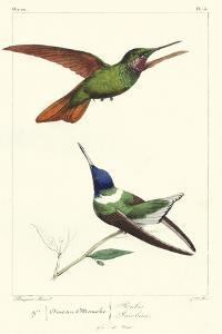 Lemaire Hummingbirds II by C.L. Lemaire