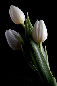 Tulips IV by C. McNemar