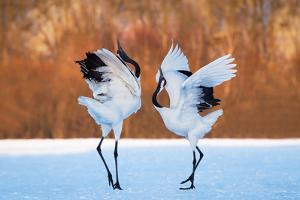The Dance of Love by C. Mei