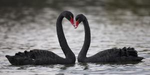 In Love by C.S. Tjandra