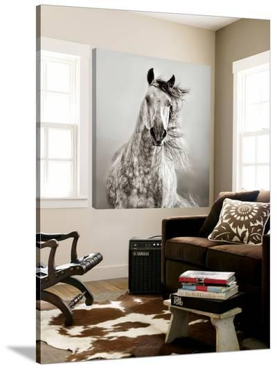 Caballo de Andaluz-Lisa Dearing-Loft Art