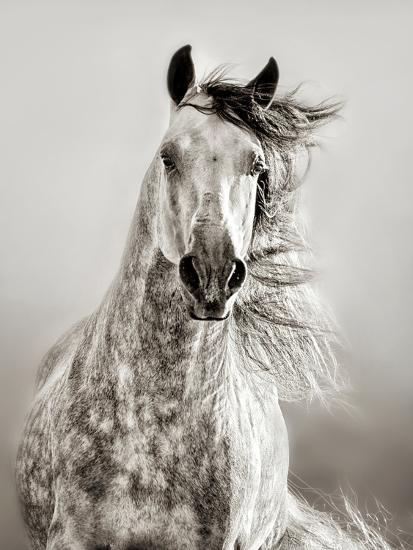 Caballo de Andaluz-Lisa Dearing-Photographic Print