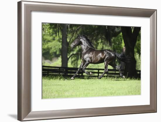 Caballos Christiani 017-Bob Langrish-Framed Photographic Print