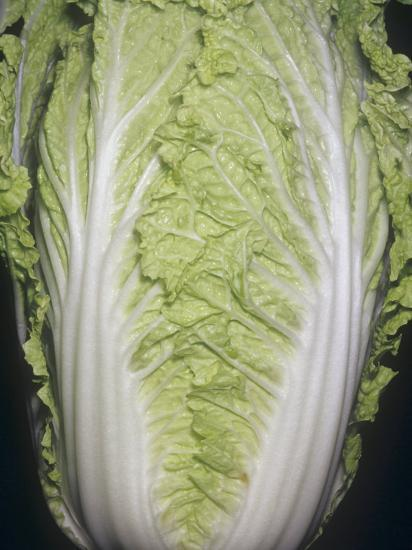 Cabbage, Chinese Cabbage, Napa (Brassica Rapa Var. Pekinensis) Native to China-Ken Lucas-Photographic Print