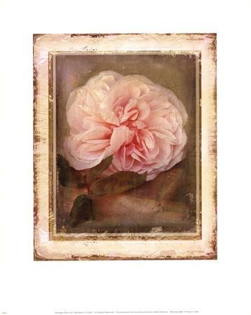 https://imgc.artprintimages.com/img/print/cabbage-roses_u-l-f8u7pd0.jpg?p=0