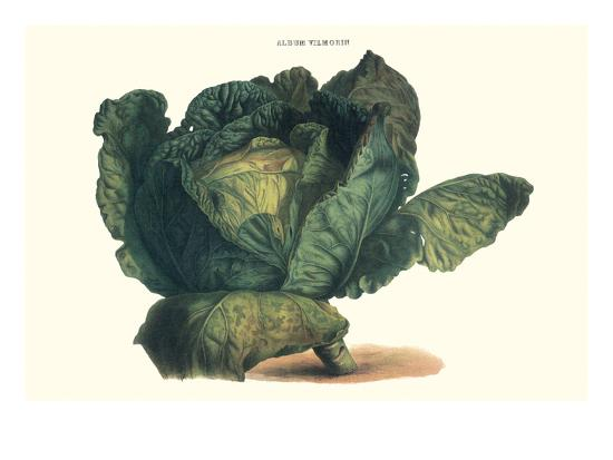 Cabbage-Philippe-Victoire Leveque de Vilmorin-Premium Giclee Print