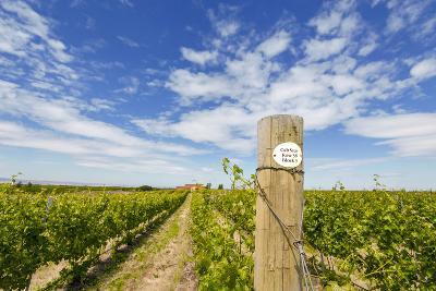 Cabernet Sauvignon Vineyards, Pepper Bridge Winery, Washington, USA-Richard Duval-Photographic Print