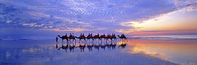 Cable Beach Camels-Wayne Bradbury-Photographic Print