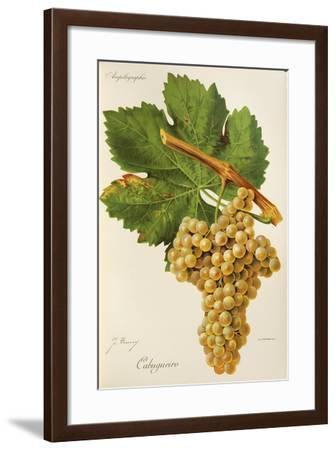 Cabugueiro Grape-J. Troncy-Framed Giclee Print