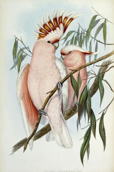 Cacatua Leadbeateri, 1848-1869-John Gould-Giclee Print
