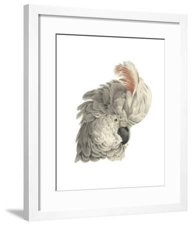 Cacatua Moluccensis-Aert Schouman-Framed Giclee Print