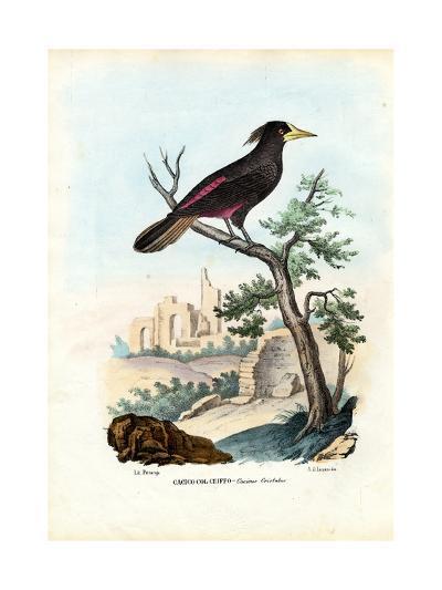 Cacique, 1863-79-Raimundo Petraroja-Giclee Print