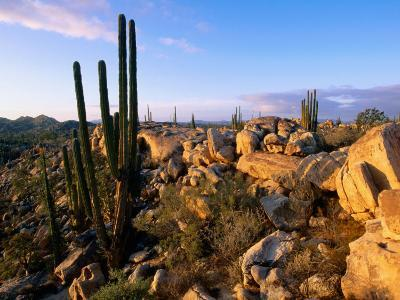 Cacti and Boulder Field, Catavina, Ensenada, Baja California, Mexico-John Elk III-Photographic Print