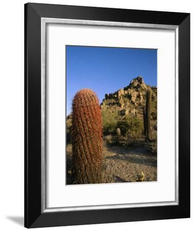 Cacti in Desert Landscape with Vivid Blue Sky-Richard Nowitz-Framed Photographic Print