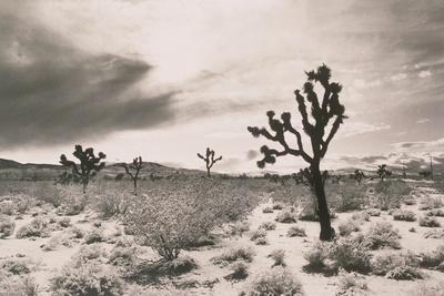 https://imgc.artprintimages.com/img/print/cacti-in-desert_u-l-po23m30.jpg?artPerspective=n