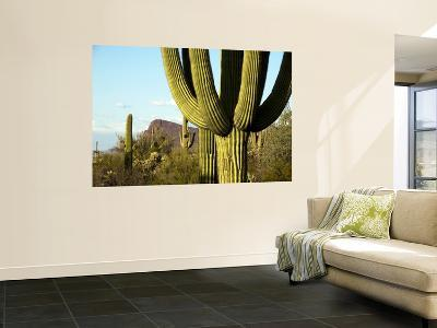 Cacti in West Unit of Saguaro National Park-Mark Newman-Wall Mural