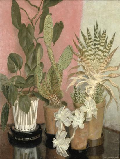 Cacti-Leonard Campbell Taylor-Giclee Print