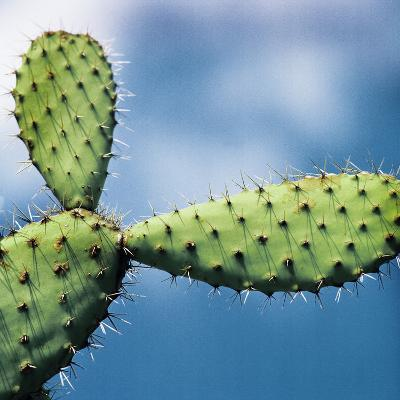 Cactus against Sky, Low Angle View-Johner Images-Photographic Print