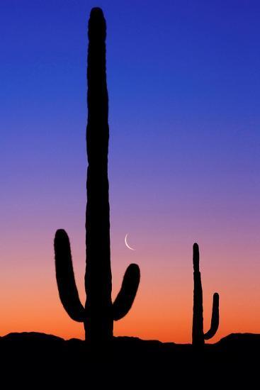 Cactus and Moon-Lantern Press-Art Print
