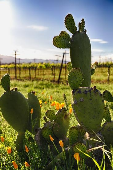 Cactus And Yellow Poppies-George Oze-Photographic Print