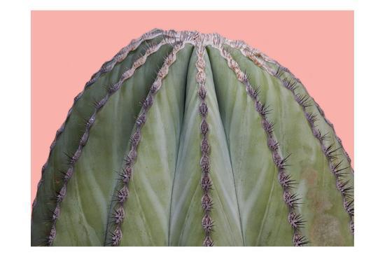Cactus Ball-Sheldon Lewis-Art Print