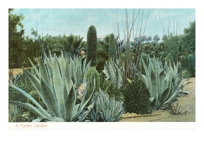 Cactus Garden with Agave--Art Print