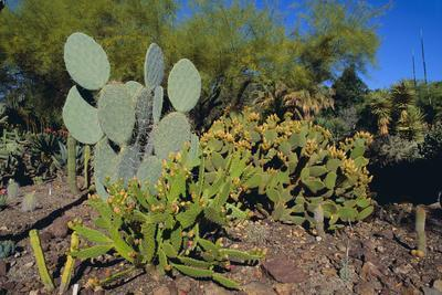 Cactus Garden-DLILLC-Framed Photographic Print