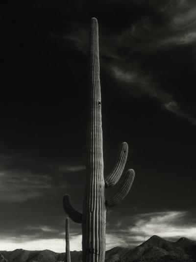 Cactus in Capitol Reef National Park, Utah-David Wasserman-Photographic Print