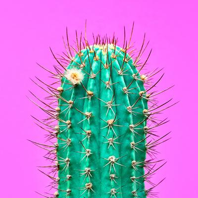 https://imgc.artprintimages.com/img/print/cactus-neon-pink-minimal-stillife_u-l-q1bxu1e0.jpg?p=0