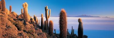 Cactus on a Hill, Salar De Uyuni, Potosi, Bolivia--Photographic Print