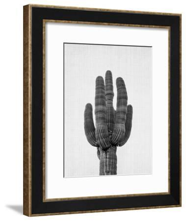 Cactus On Grey-LILA X LOLA-Framed Art Print