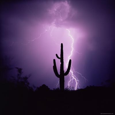 Cactus Silhouetted Against Lightning, Tucson, Arizona, USA-Tony Gervis-Photographic Print