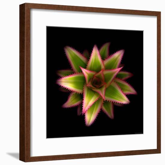 Cactus Star-Robert Cattan-Framed Photographic Print