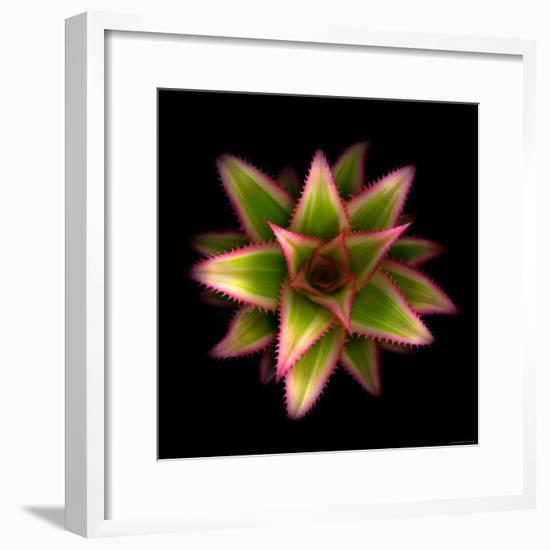 Cactus Star-Robert Cattan-Framed Photographic Print