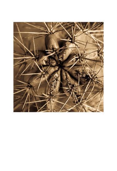 Cactus-Jean-Fran?ois Dupuis-Art Print