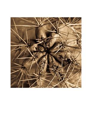 https://imgc.artprintimages.com/img/print/cactus_u-l-f5h72q0.jpg?p=0