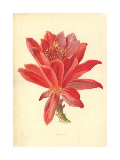 Cactus-Frederick Edward Hulme-Giclee Print