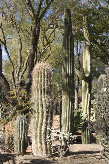 Cactus-Natalie Tepper-Photo
