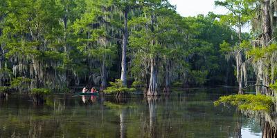 Caddo Lake, Texas, United States of America, North America-Kav Dadfar-Photographic Print