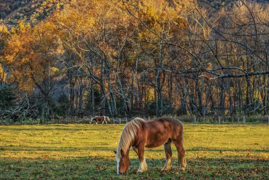 Cades Cove Horses at Sunset-Galloimages Online-Photographic Print