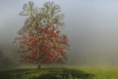 Cades Cove Tree-Galloimages Online-Photographic Print